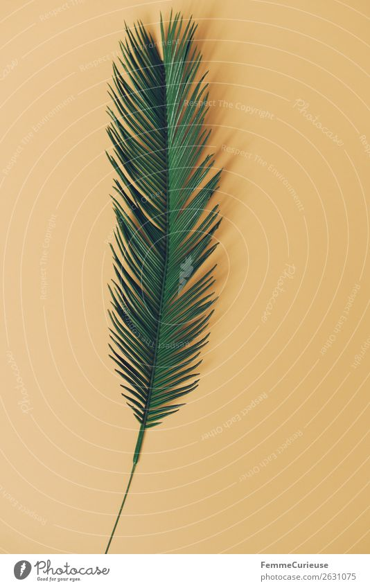 Palm branch on yellow background Nature Stationery Paper Creativity Palm tree Palm frond Plant Part of the plant Green Yellow open space Design