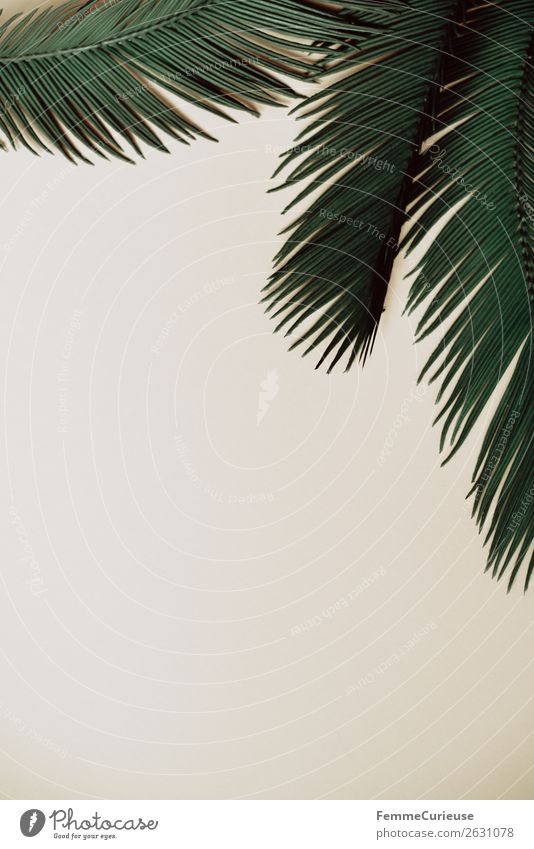 Three palm branches on neutral ground Nature Palm tree Palm frond Plant Part of the plant Foliage plant Bordered Frame Colour photo Studio shot Copy Space left