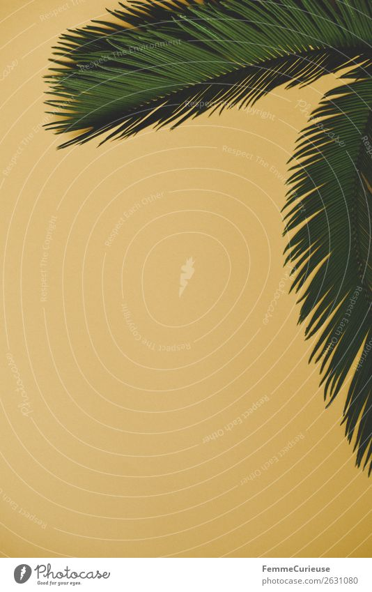 Nature Green Yellow Design Creativity Paper Palm tree Stationery Tropical Palm frond