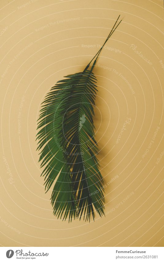 Two palm branches on yellow background Nature Palm tree Palm frond Plant Part of the plant Yellow Foliage plant Decoration Colour photo Studio shot Close-up