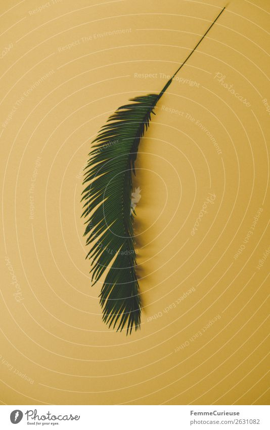 Palm branch on yellow background Nature Palm tree Palm frond Yellow Green Plant Foliage plant Part of the plant Colour photo Studio shot Close-up