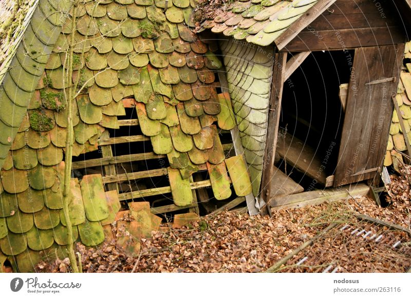 sheltered Gloomy Moss Overgrown Hiding place Hut Derelict Decline Twigs and branches Leaf Slate slate roof Wooden hut Front door Roof Old Shingle roof