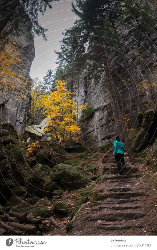 Human being Vacation & Travel Nature Landscape Winter Mountain Autumn Environment Natural Tourism Rock Leisure and hobbies Hiking Elbsandstone mountains