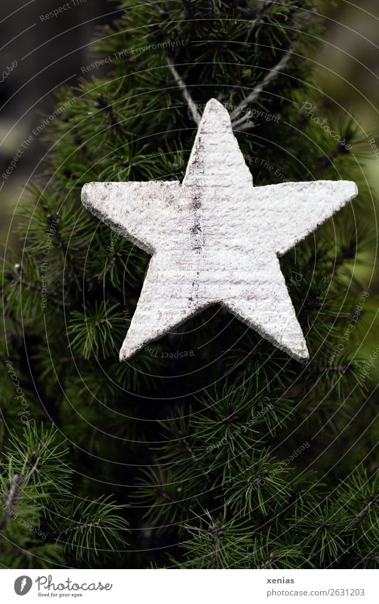 Christmas & Advent Green White Winter Wood Star (Symbol) Fir tree