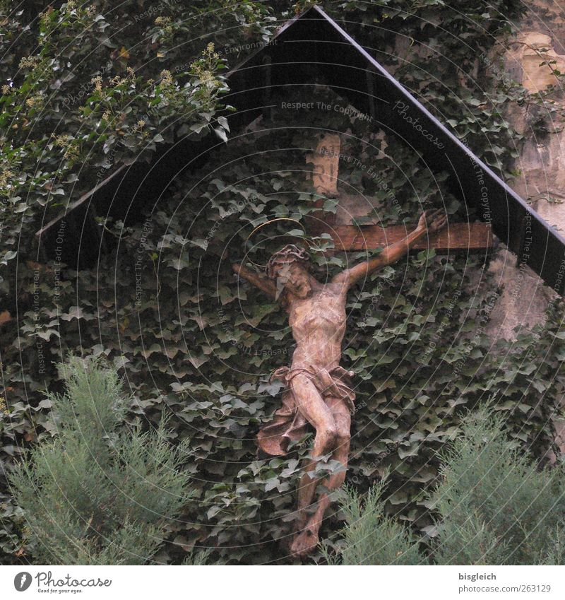 crucifix Plant Leaf Foliage plant Wall (barrier) Wall (building) Wood Crucifix Brown Green Belief Religion and faith Death Jesus Christ Crown of thorns Anguish