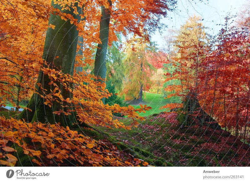 It's herbstelt... Environment Nature Landscape Plant Autumn Climate Weather Beautiful weather Tree Bushes Beech tree Garden Park Meadow Forest Hill Kassel
