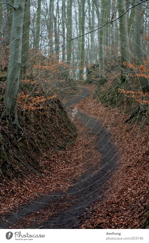 Nature Tree Red Plant Leaf Black Forest Environment Landscape Cold Autumn Gray Lanes & trails Earth Brown Dirty
