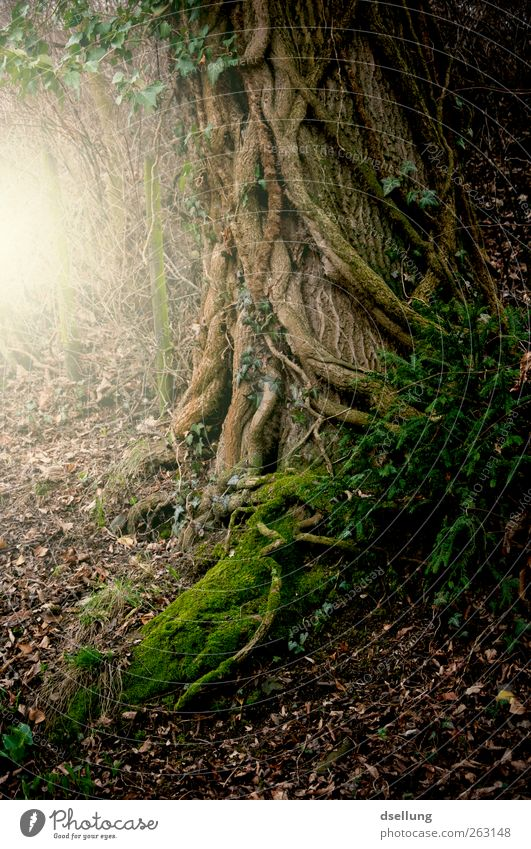 Nature Green Tree Plant Forest Yellow Environment Death Dark Landscape Gray Dream Earth Brown Power Wild