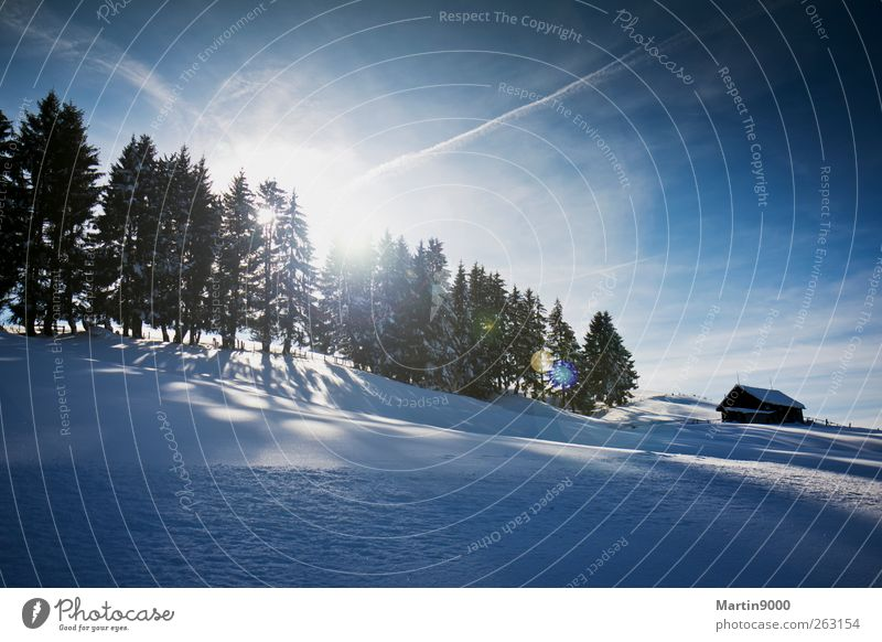Nature Blue Sun Landscape Winter Forest Cold Mountain Environment Snow Bright Horizon Field Leisure and hobbies Fresh Hiking