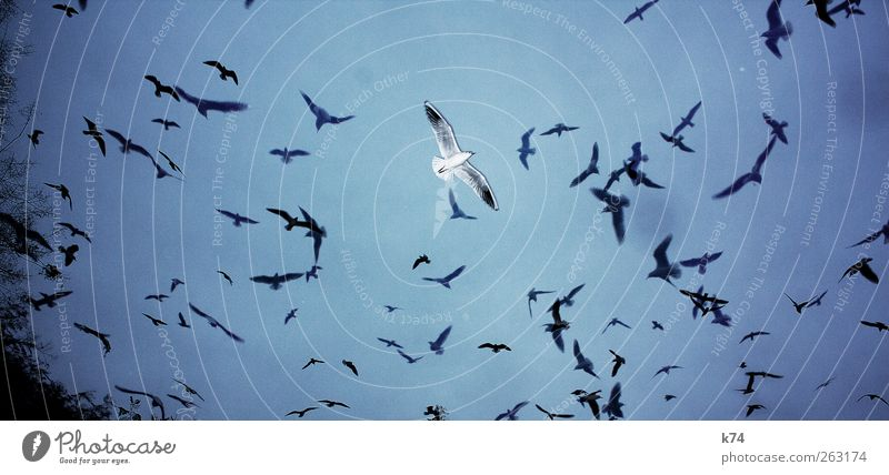 Sky Blue Animal Loneliness Bird Flying Free Exceptional Group of animals Flock Stick out