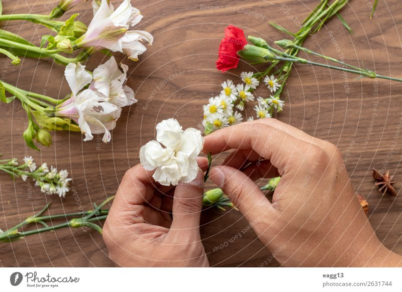 Holding flowers with hands Human being Nature Plant Colour Beautiful Green White Red Hand Flower Love Blossom Spring Natural Style Garden