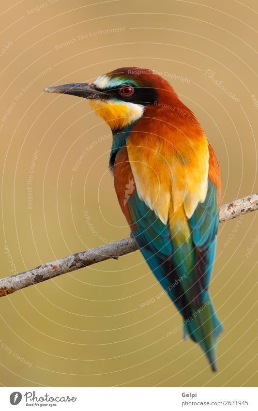 Small bird perched on a branch Exotic Beautiful Freedom Nature Animal Bird Bee Glittering Feeding Bright Wild Blue Yellow Green Red White Colour wildlife