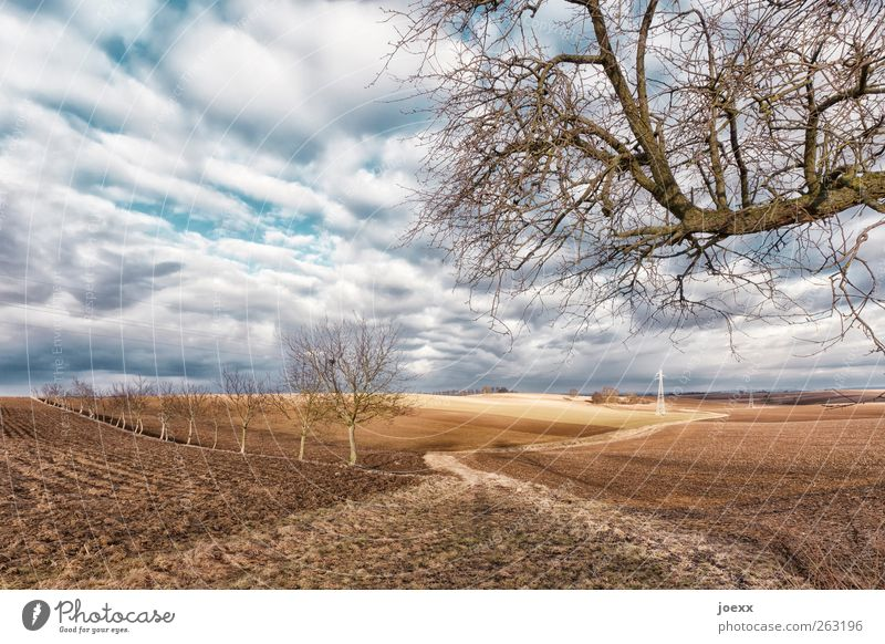 dirt road Landscape Earth Sky Clouds Spring Winter Beautiful weather Tree Field Lanes & trails Old Blue Brown White Idyll Calm Colour photo Multicoloured