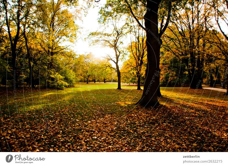 Friendly weather Branch Tree Relaxation Vacation & Travel Grass Autumn Autumn leaves Leaf Deserted Nature Park Plant Lawn Calm Tree trunk Bushes Copy Space