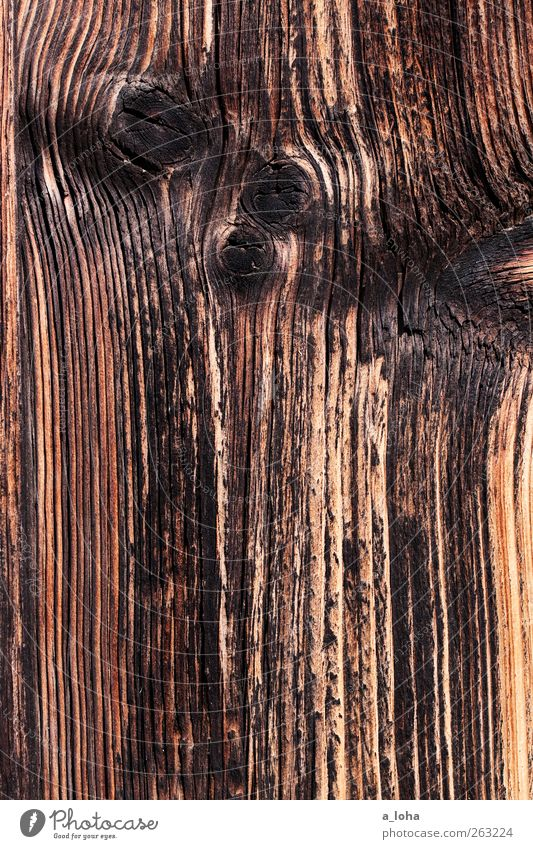 wooden Wood Line Stripe Old Dark Firm Brown Black Burnt Wood grain Branch Dry Colour photo Exterior shot Close-up Detail Abstract Pattern Structures and shapes