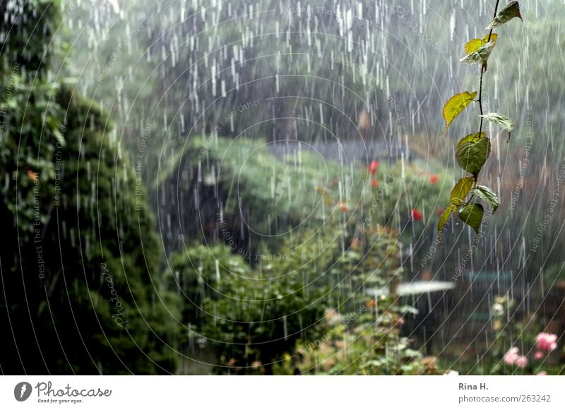 Nature Green Plant Summer Garden Rain Weather Wet Climate Drops of water Elements Storm