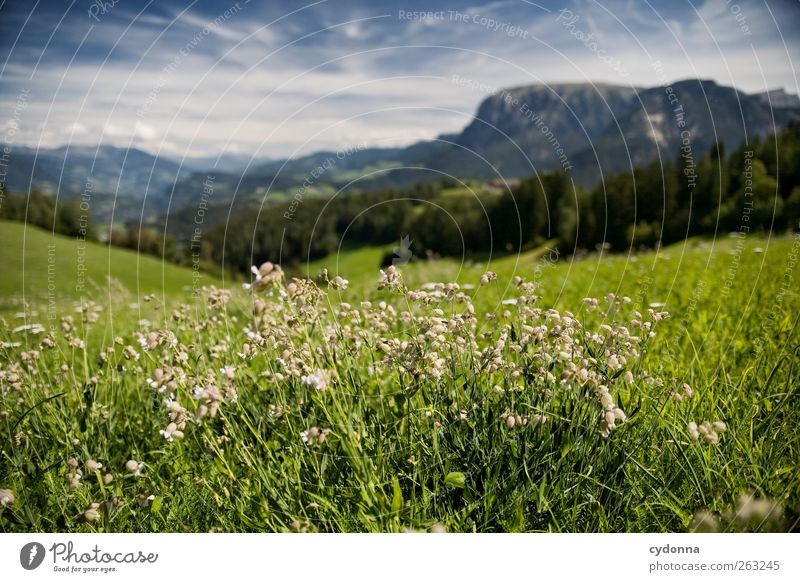 Nature Vacation & Travel Summer Flower Calm Far-off places Relaxation Environment Landscape Meadow Mountain Freedom Grass Horizon Trip Adventure