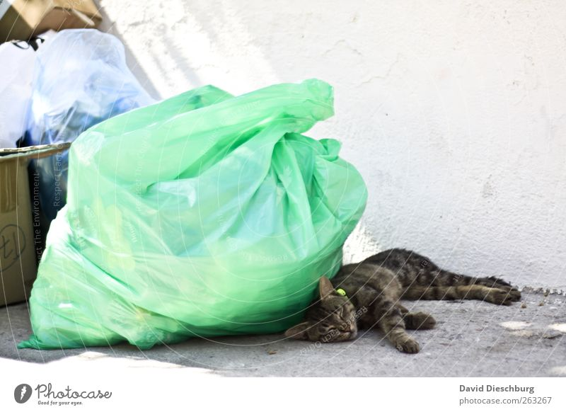 In the cat dreamland Animal Pet Cat 1 Brown Green White Sleep Lie Break Relaxation Trash Garbage bag Wall (building) Stationary Closed eyes Lunch hour Siesta