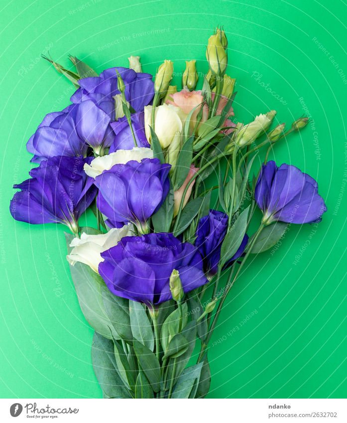 bouquet of flowers Eustoma Lisianthus Feasts & Celebrations Valentine's Day Mother's Day Birthday Nature Plant Flower Leaf Blossom Bouquet Blossoming Fresh