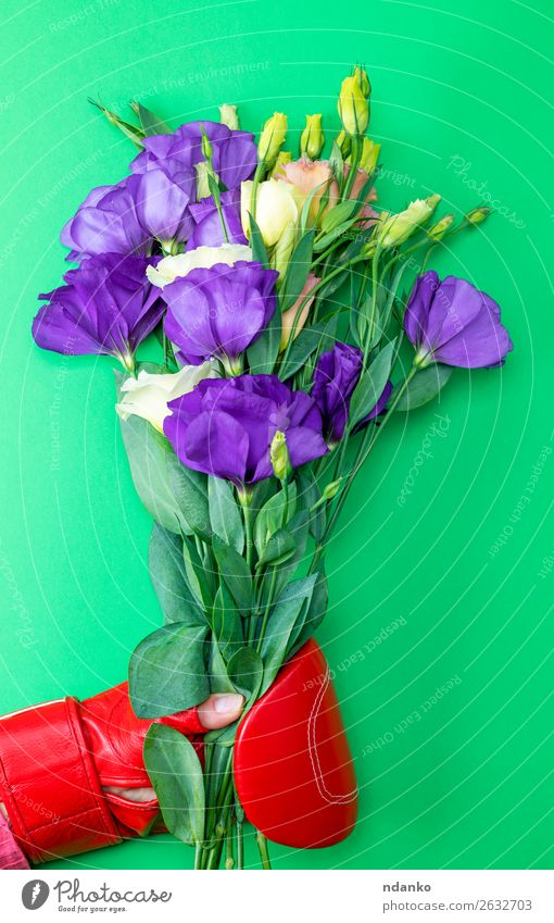 hand in a red boxing glove holding a bouquet of flowers Blue Colour Green Red Hand Flower Leaf Blossom Natural Sports Feasts & Celebrations Garden Bright