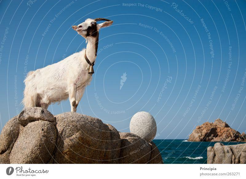 Ocean Landscape Coast Observe Beautiful weather Concentrate Testing & Control Pride Farm animal