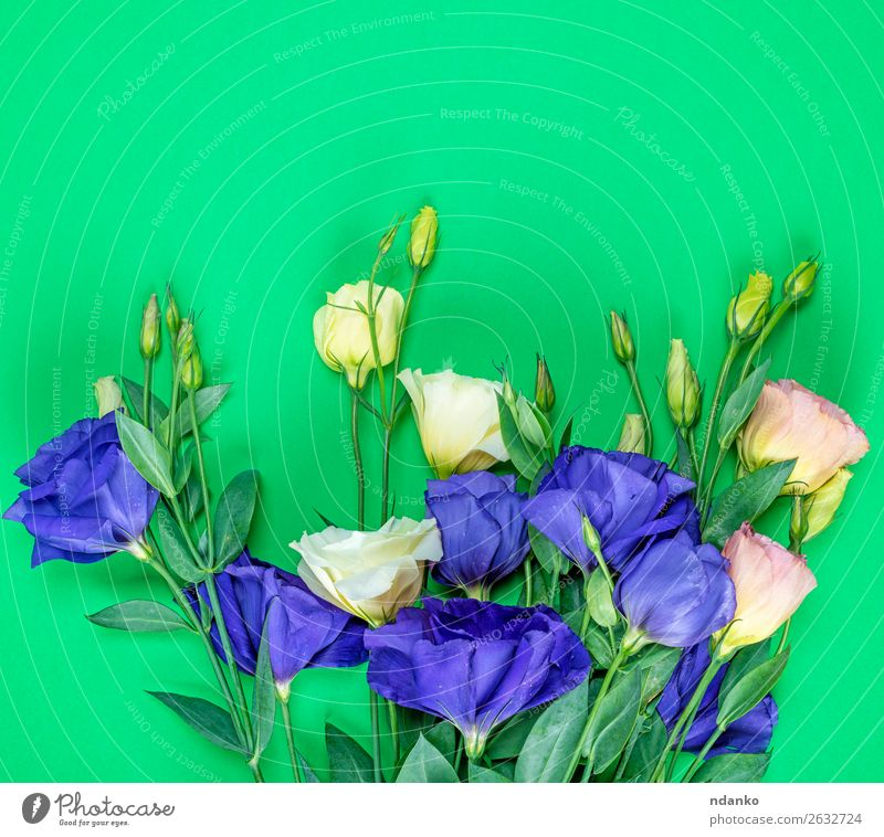 fresh blooming flowers Eustoma Lisianthus Nature Plant Blue Colour Green Flower Leaf Blossom Natural Feasts & Celebrations Bright Fresh Birthday Gift Blossoming