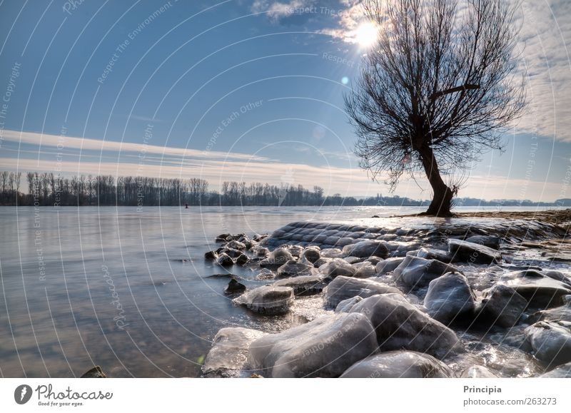Tree Sun Winter Calm Contentment River Beautiful weather River bank Winter walk Rhein valley