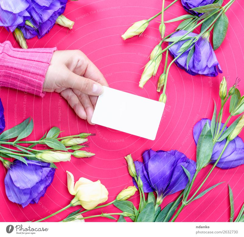 hand in pink sweater holding a blank white paper business card Woman Human being Youth (Young adults) Beautiful White Red Hand Flower 18 - 30 years Adults