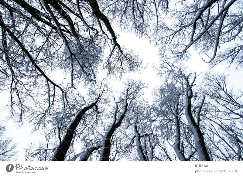 """snowy treetops Environment Nature Landscape Plant Sky Winter Snow Tree Cold """"Branch up ,treetop wooded Outside, cold. Belief God great Autumn sky,skywards Tall"""