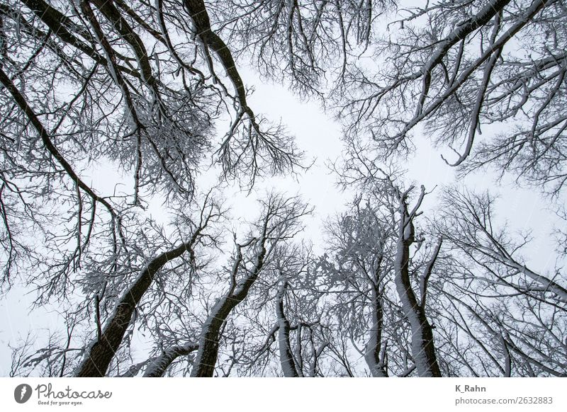 "snowy treetops Environment Nature Landscape Plant Sky Ice Frost Snow Tree Park Forest Cold Environmental protection ""Branch up ,treetop wooded Outside, cold."