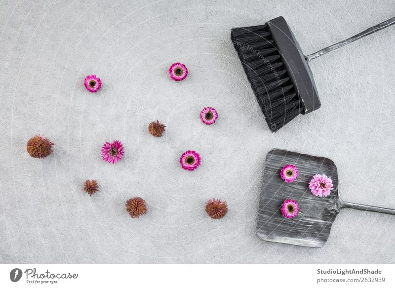Dustpan, brush and pink flowers on concrete floor Nature Old Summer Colour Landscape Red Flower Black Autumn Natural Garden Pink Metal Concrete Seasons Sidewalk