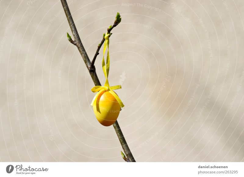 Easter egg with lots of text space Decoration Spring Yellow Gray Egg Branch Copy Space left Copy Space right
