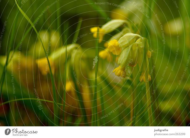 Nature Green Beautiful Plant Flower Yellow Environment Meadow Grass Garden Blossom Fresh Growth Blossoming