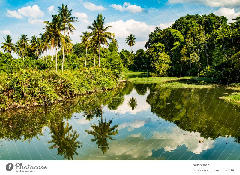 we are the climate  corona thoughts Contrast Light Day Exterior shot Colour photo Malaya River Virgin forest Water Landscape Nature Vacation & Travel Tourism