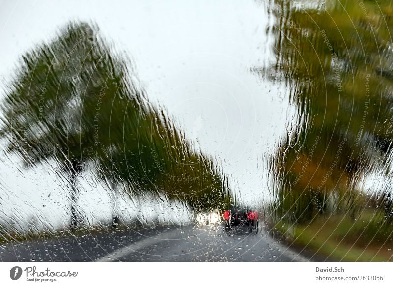 Country road in autumn when it rains Landscape Water Drops of water Autumn Bad weather Rain Tree Avenue Transport Motoring Street Car Driving Brown Green Black