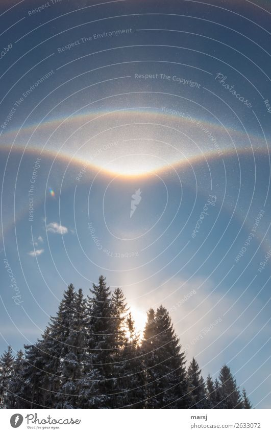 The cold makes it possible Life Harmonious Meditation Winter Sky Beautiful weather Ice Frost Forest Illuminate Exceptional Authentic Bizarre Nature Light column