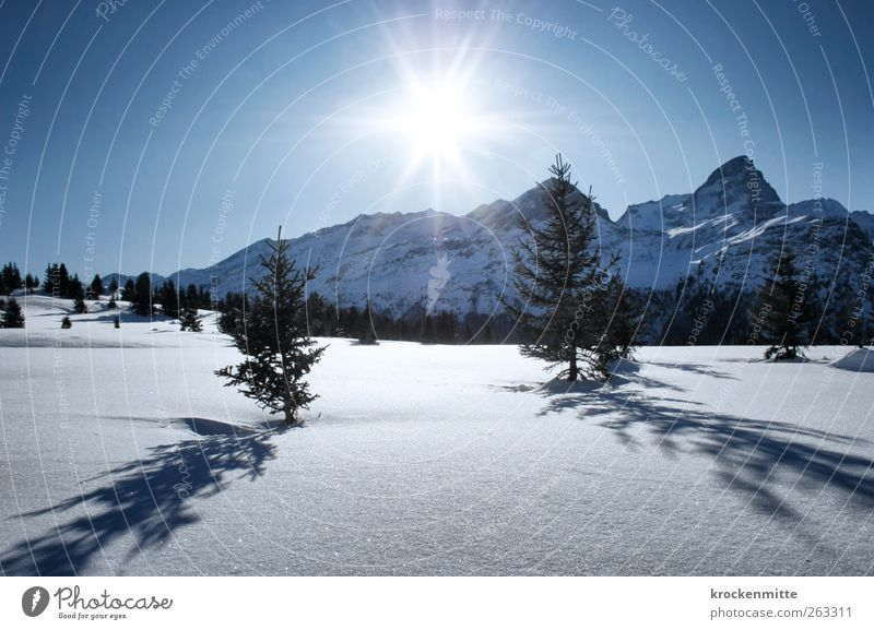 A day in the snow Environment Nature Landscape Sky Cloudless sky Sun Sunlight Winter Beautiful weather Snow Plant Tree Fir tree Mountain Peak Snowcapped peak