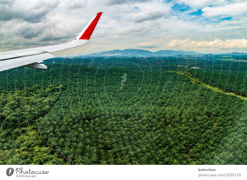 Vacation & Travel Nature Plant Green Landscape Tree Forest Far-off places Tourism Freedom Think Trip Adventure Dangerous Airplane Asia