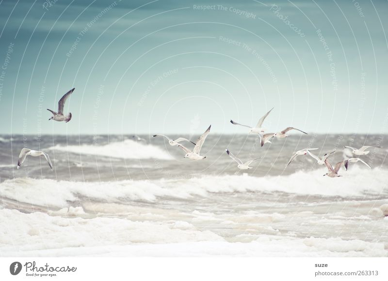 Stormy sea Ocean Waves Environment Nature Animal Elements Air Water Sky Horizon Winter Climate Weather Wind Gale Coast Baltic Sea Wild animal Bird Silvery gull