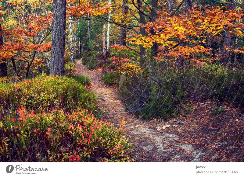 Between summer and winter Nature Landscape Autumn Tree Bushes Forest Lanes & trails Brown Yellow Green Orange Idyll Change Automn wood Colour photo