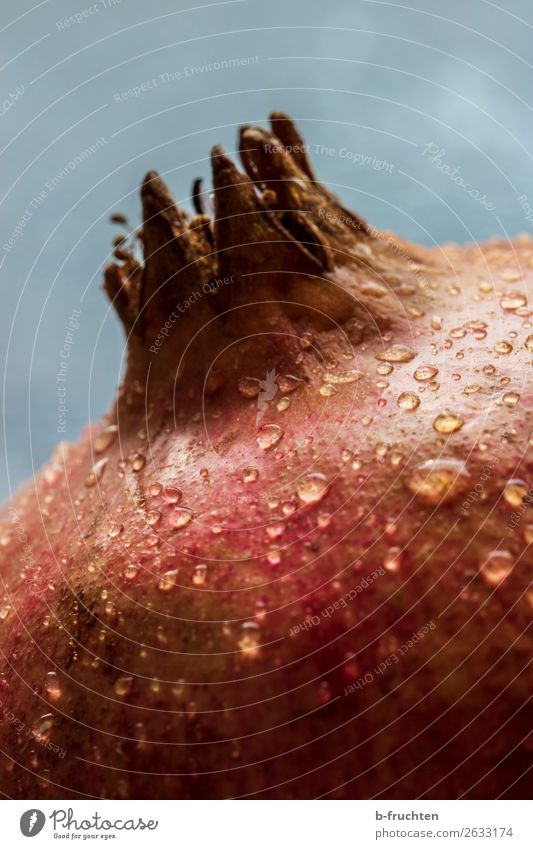 Pomegranate with drops of water - close-up view Food Fruit Organic produce Vegetarian diet Diet Healthy Eating To enjoy Fresh Round Juicy Red
