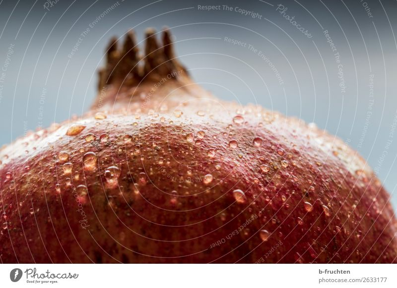 Pomegranate detail Food Fruit Organic produce Vegetarian diet Healthy Eating Fresh Red To enjoy Fruity Drops of water Exotic Sheath Macro (Extreme close-up)