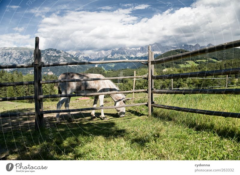Beautiful donkey life Harmonious Relaxation Calm Vacation & Travel Trip Far-off places Freedom Hiking Environment Nature Landscape Sky Grass Meadow Alps