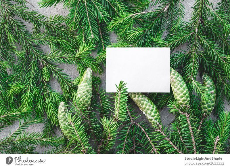 Blank white card and green fir branches Winter Decoration Christmas & Advent Nature Plant Tree Forest Paper Natural Gray Green Colour Christmas tree coniferous