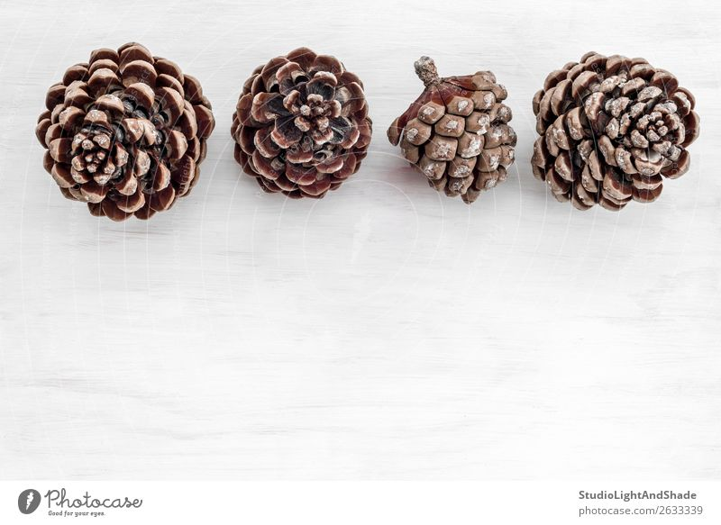 Four pine tree cones on white wooden background Style Design Interior design Decoration Table Nature Plant Tree Wild plant Forest Wood Simple Beautiful Natural