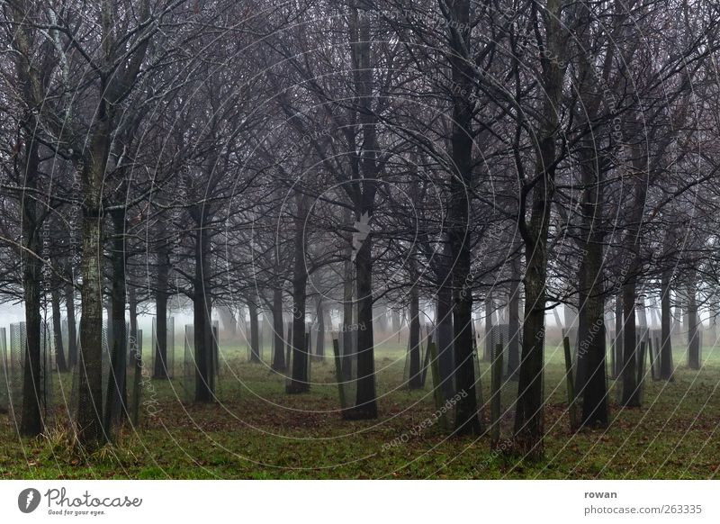 density Environment Nature Landscape Plant Autumn Winter Bad weather Fog Tree Grass Garden Park Forest Sharp-edged Creepy Cold Growth Branchage