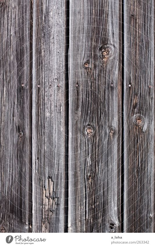i wish i were pinocchio Wood Line Old Original Dry Brown Gray Nostalgia Pure Attachment Knothole Wooden board Nail Gate Colour photo Subdued colour