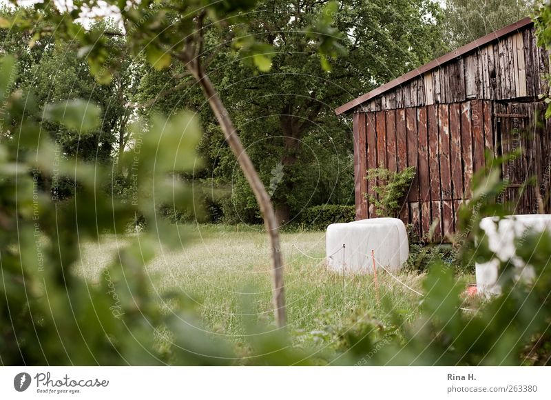 country life Agriculture Forestry Environment Nature Landscape Plant Summer Tree Grass Bushes Field Hut Authentic Green Safety (feeling of) Barn Hay bale