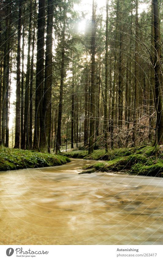 Nature Water Green Tree Plant Black Forest Environment Landscape Grass Spring Bright Brown Weather Tall Bushes