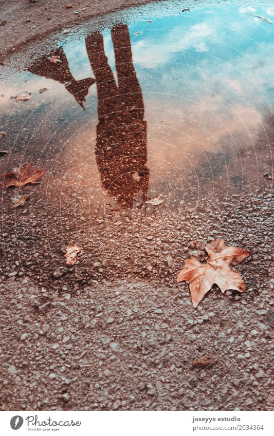 Reflection in a puddle of a woman with her dog Lifestyle Beautiful Winter Human being Friendship Adults Animal Sky Autumn Storm Rain Leaf Dog Love Dark Cold